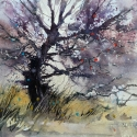 Rex Beanland, Glenmore Tree, watercolour, 12 x 16