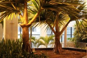 Rex Beanland, Devonian Gardens Palm trees