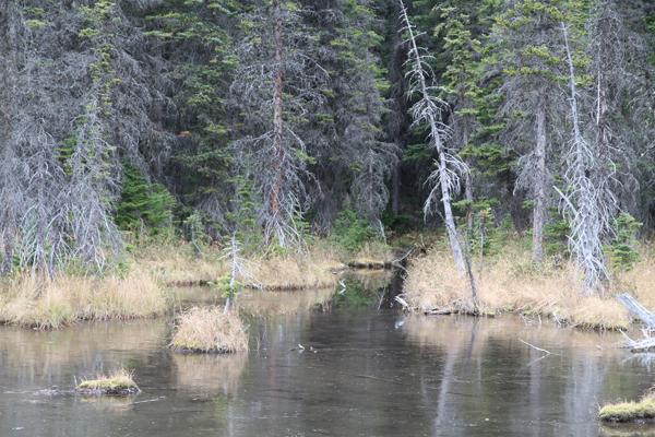 Rex Beanland, Cameron Pond